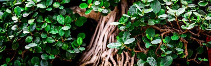 bonsai landschaften