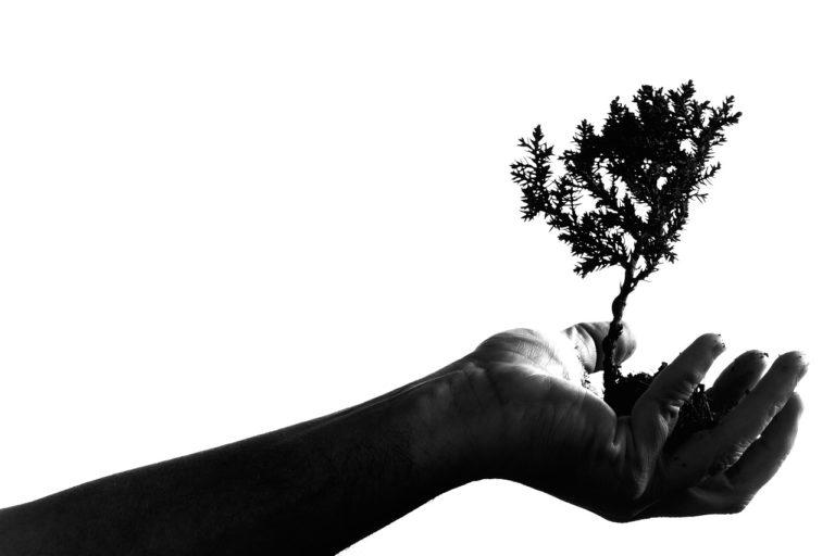 bonsai umtopfen
