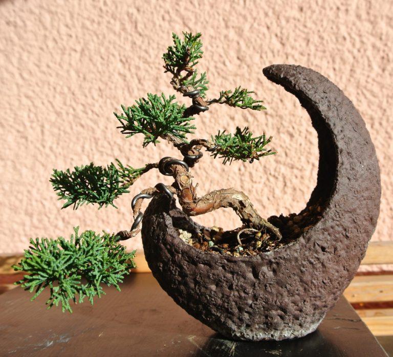 richtiger dünger bonsai