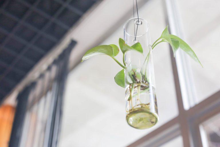 bonsai flüssigdünger