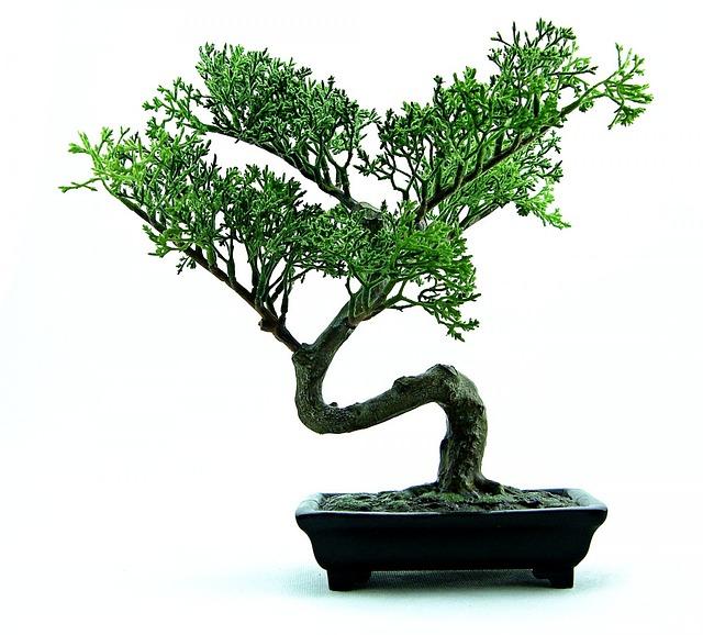 bonsai düngen