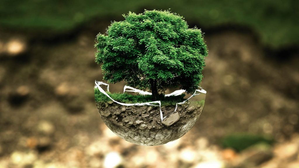 bonsai pflege
