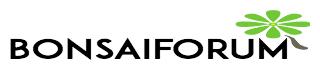 bonsaiforum.ch Logo
