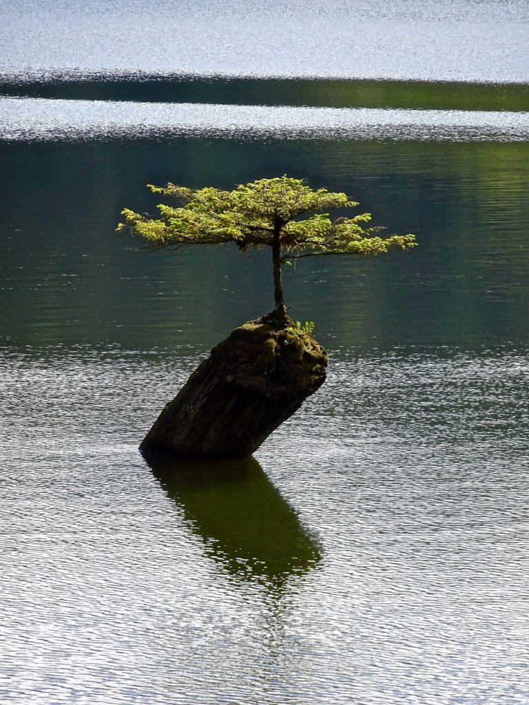 bonsai organischer dünger